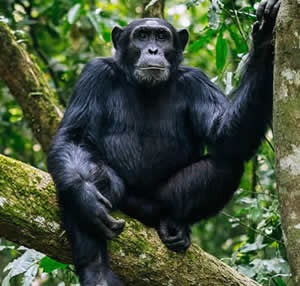 Kibia National Park in Burundi